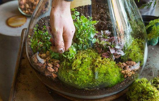 How To Make A Self Sustaining Terrarium Self Sustaining