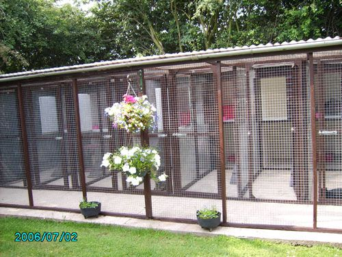 How To Build A Cattery Google Search Cattery Cat Enclosure Cat Cages
