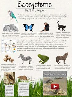 An ecosystem is a community of living organisms plants for Animals that live in soil for kids