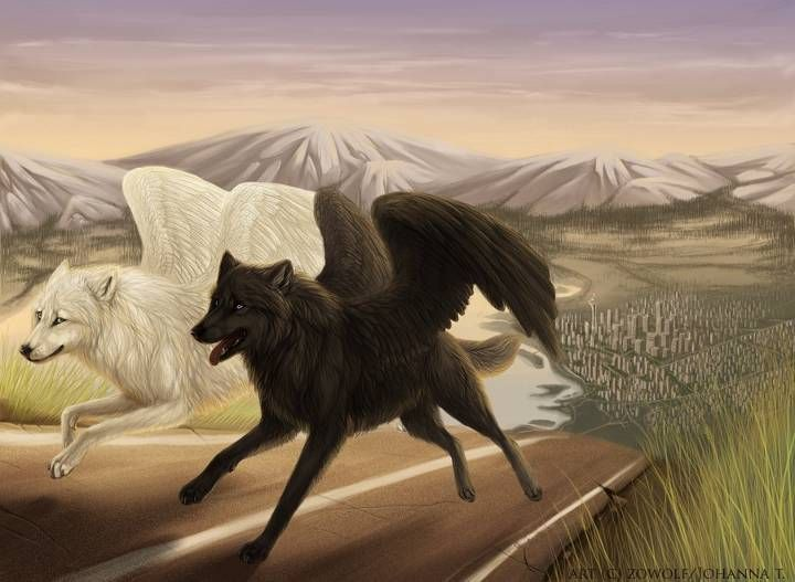 Winged wolves, one black and one white. JM. | Fantasy wolf ...