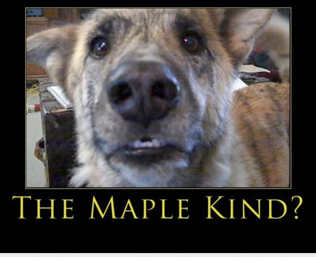 Maple Kind Ahhhhhhh Talking Dog Funny Dog Videos Dog Gifs