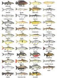 como filetar peixe - Pesquisa Google