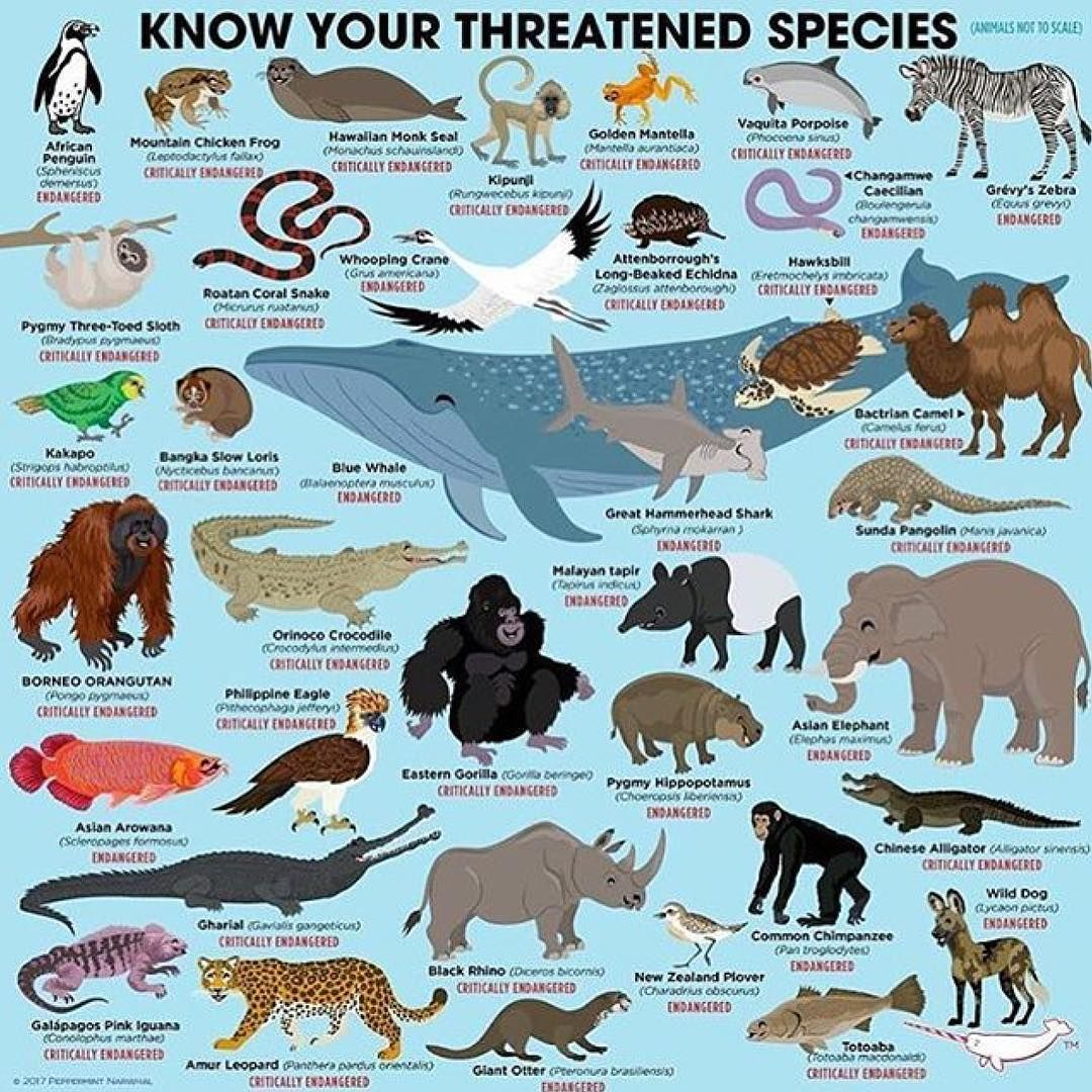 Pin On Do You Know Your Animals