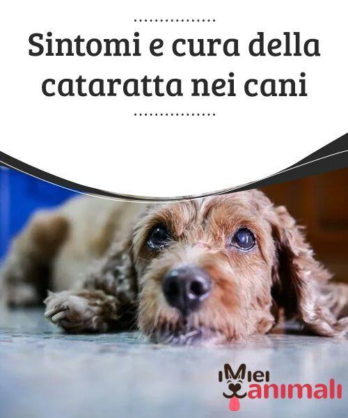 Cataratta nel cane: cause, sintomi, cura e costo ...