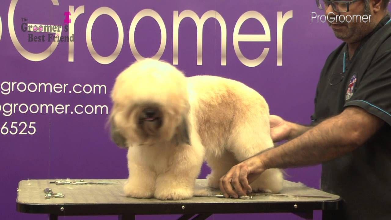 How To Groom A Lhasa Poo Pet Trim Grooming Guide Pro Groomer Groomer Lhasa Dog Grooming
