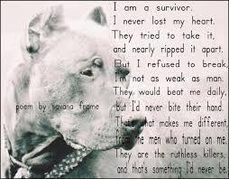 pitbull poems