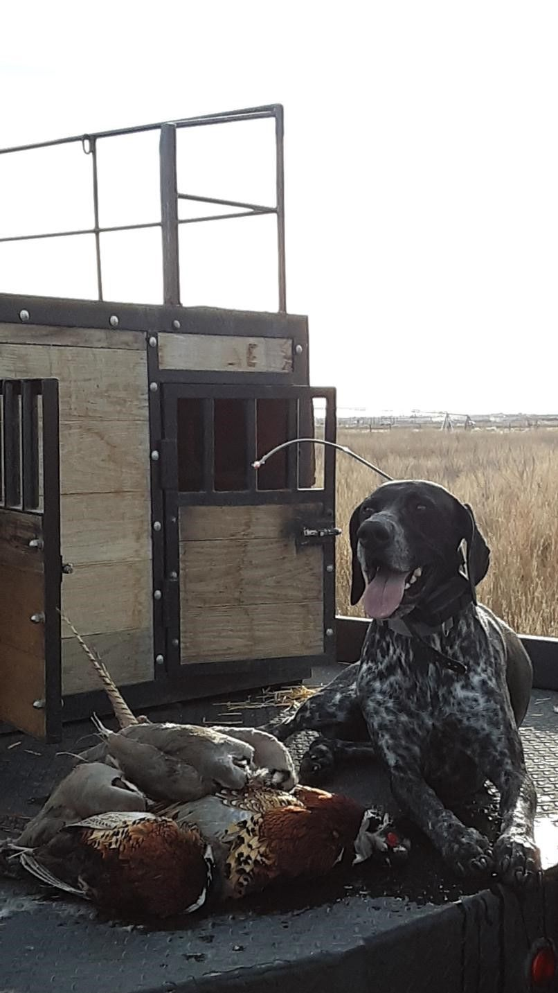 How good is your bird dog? Come train or test your dogs