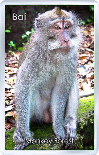 $3.29 - Acrylic Fridge Magnet: Indonesia. Sacred Monkey Forest. Ubud. Bali