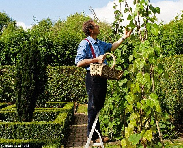 The Garden Is So Full Of Promise As March Turns To April, Says Monty Don |  Gardens.