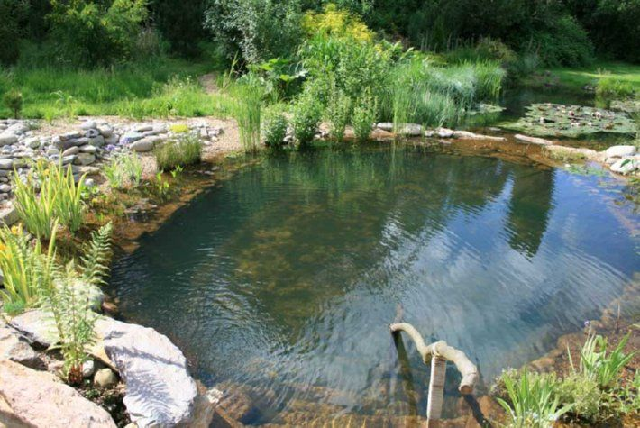 Natural pool how to create a natural swimming pool with for Farm pond maintenance