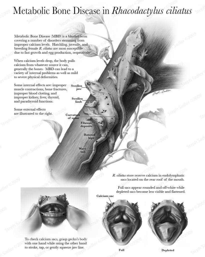 Reference for metabolic bone disease in geckos herping around reference for metabolic bone disease in geckos nvjuhfo Images