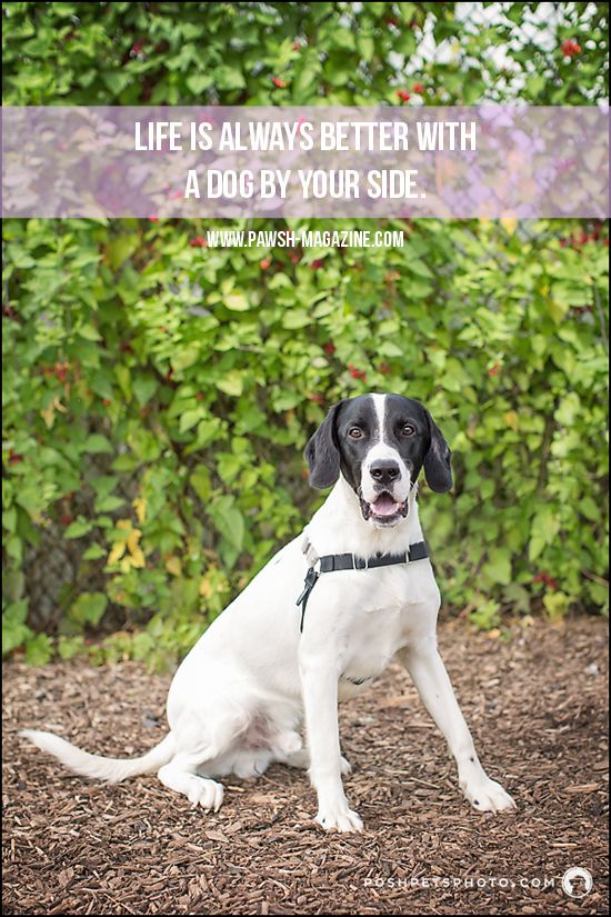 Life Is Better With A Dog By Your Side Dogquote Dogphotography Dog Quotes Dogs Therapy Dogs