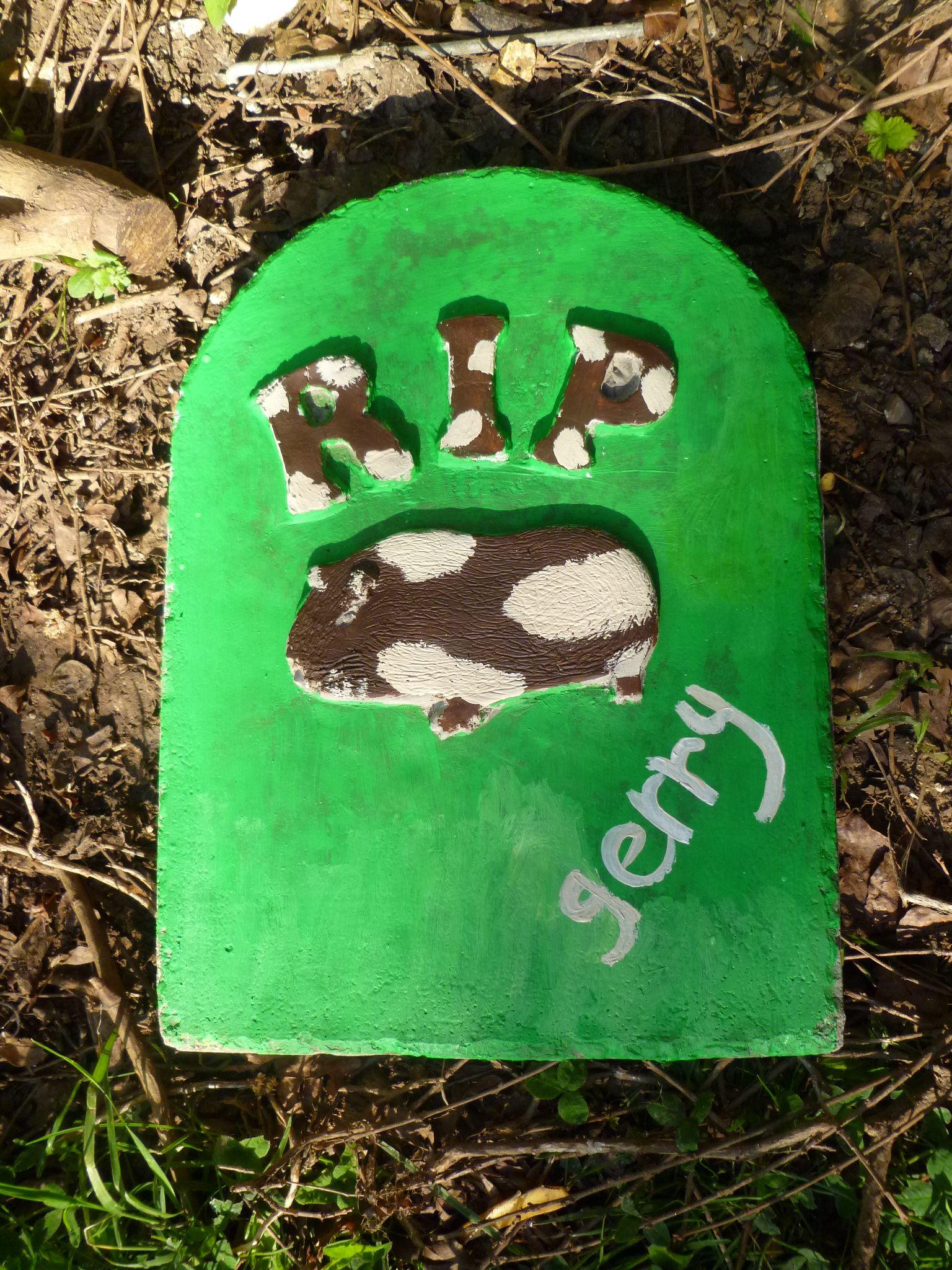 For 'Gerry' the Guinea pig