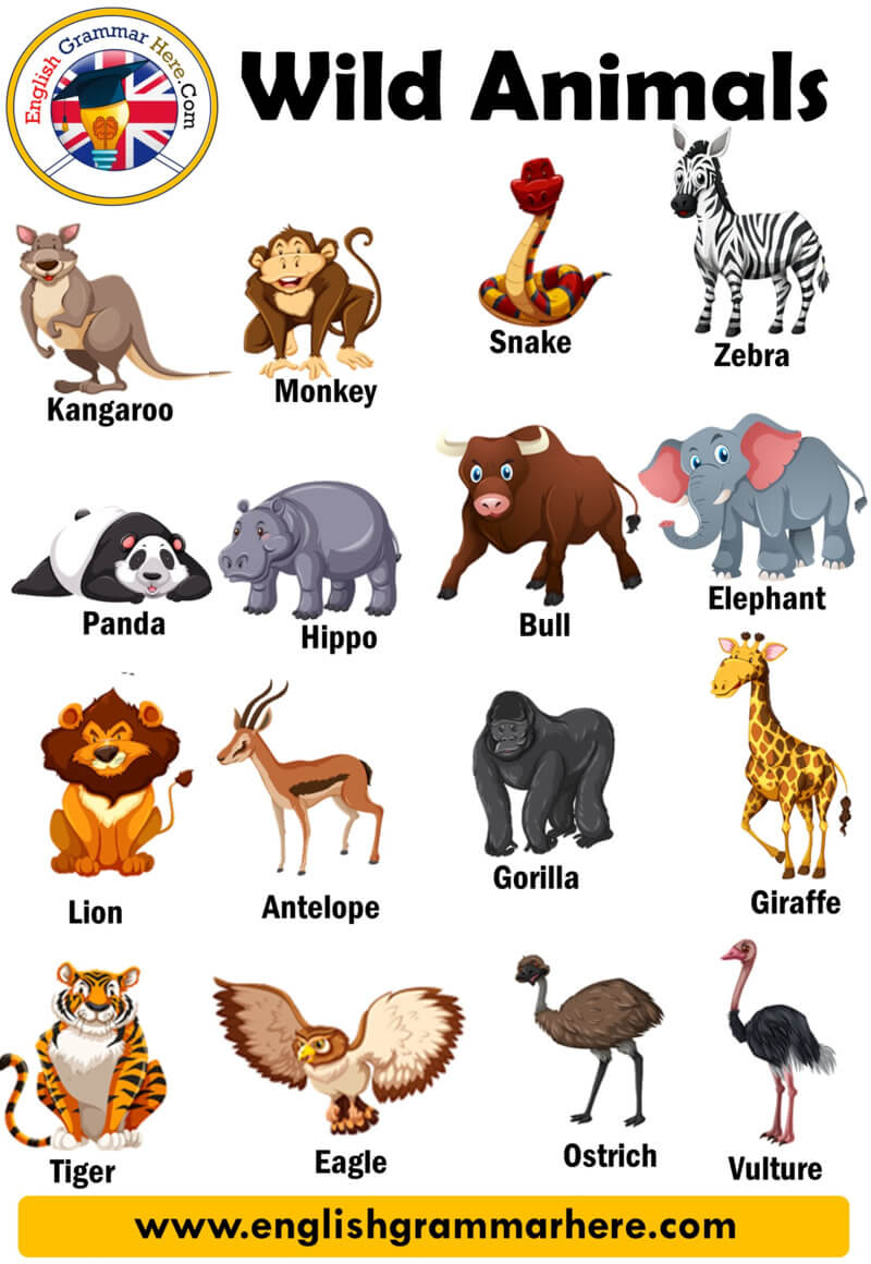 Wild Animals, Definition and Examples English Grammar