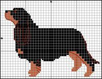 Cavalier King Charles Spaniel (black-tan)