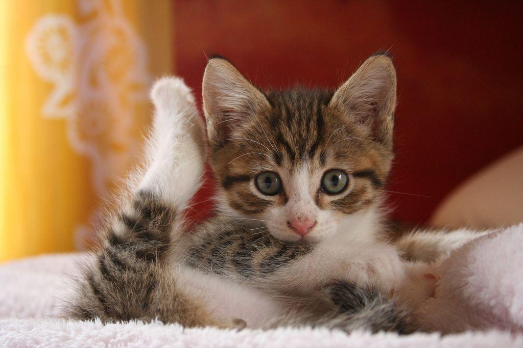 yoga baby kitty | by moonchild