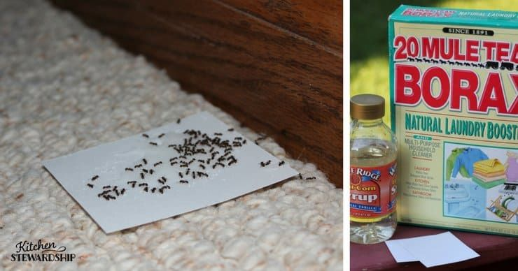 How to make homemade nontoxic ant poison ants diy pest
