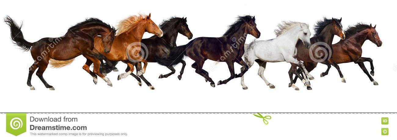 Foto acerca Funcionamiento de la manada del caballo aislado en el ...