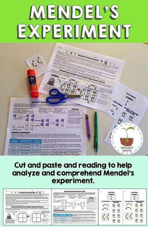 Genetics- Mendel's Experiments | Teacher ideas | Biology classroom