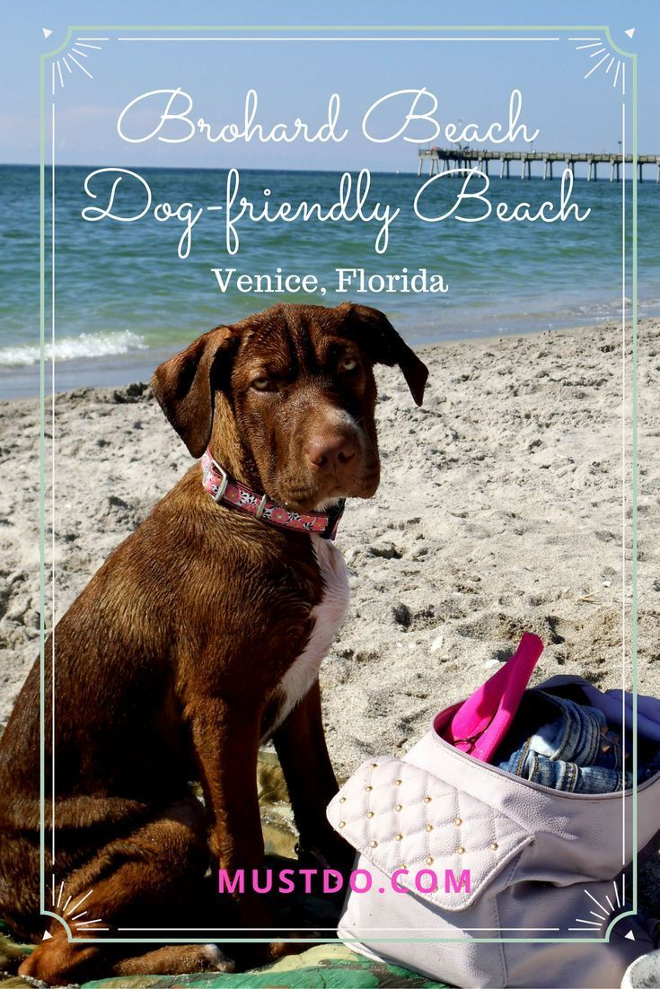 Brohard Beach Paw Park And Venice Fishing Pier Must Do Visitor Guides Dog Friendly Beach Pier Fishing Dog Beach