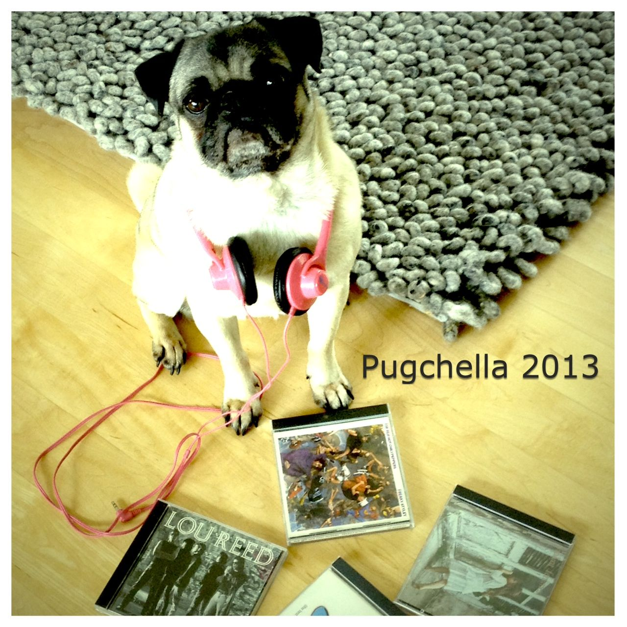 Pugchella Lou Reed Is Still On The Bill Coachella Pugs Pug Rescue Cute Animals