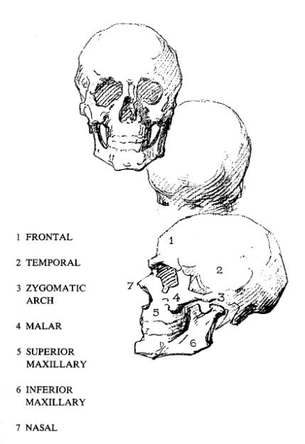 The Complete Bridgman Part 2 in 2020   Bridgman, Anatomy ...
