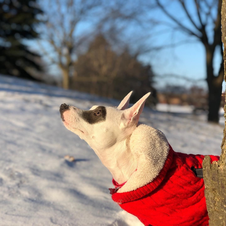 The sun. Upon my face. Makes me feel. Serene.  #workhardplayfetch #pets #petsofinstagram #petstagram #dogs #dog #dogsofinstagram #dogstagram #animals ( #📷 @workhardplayfetch )