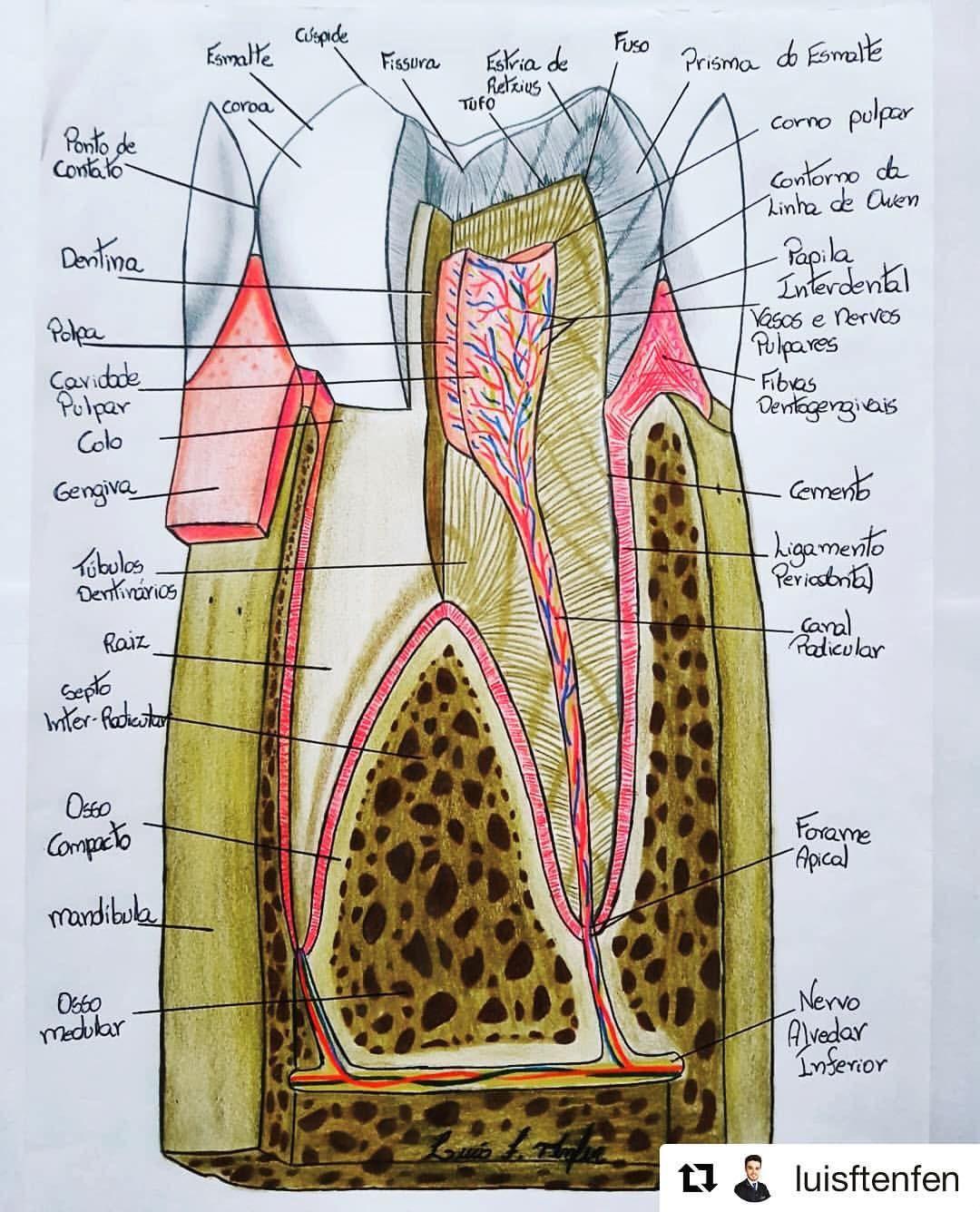 582 Likes, 5 Kommentare – Zahnarzt Leben (VDD) (Dental INC) auf Instagram: …   – Dental Hygiene School