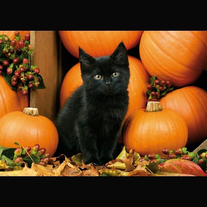Top 10 Most Beautiful Cat Breeds In The World Black Cat Halloween Cat Wallpaper Halloween Animals