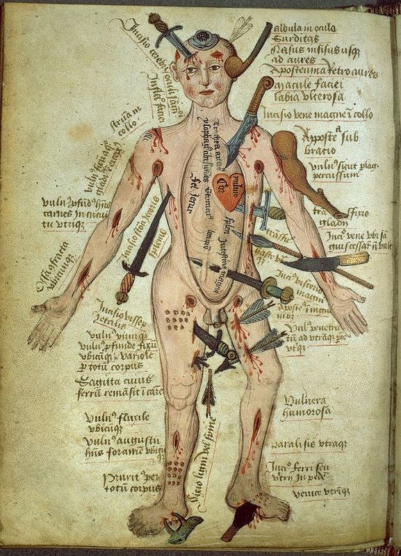 Lujo Hoja De Cálculo De La Anatomía Celular Componente - Anatomía de ...