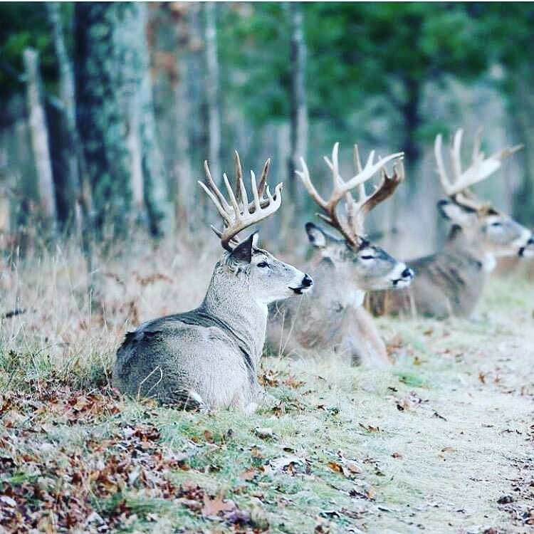 I\'m Pretty Good At Drinking Beer | Grumpy\'s Whitetails | Pinterest ...