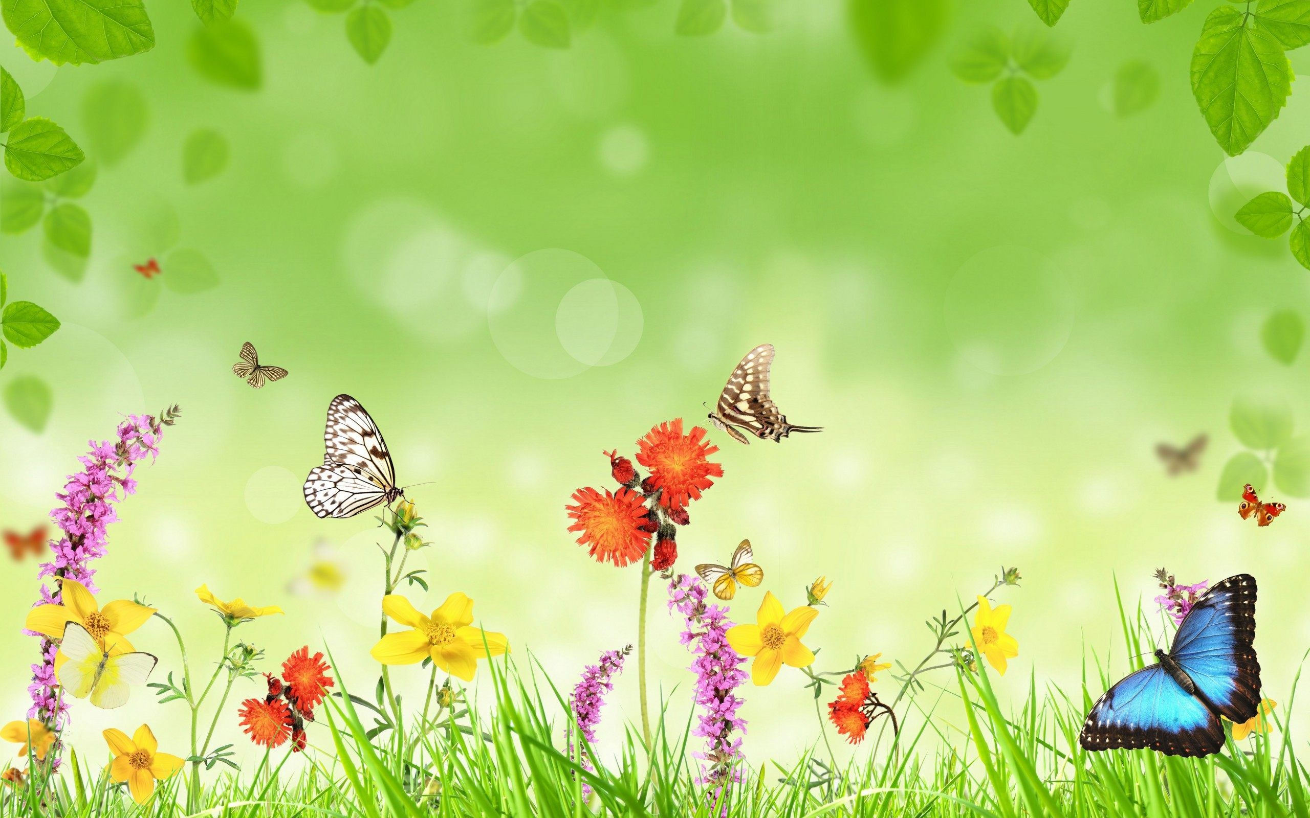 butterflies and flowers art wallpaper for desktop and mobile free download we have best collection