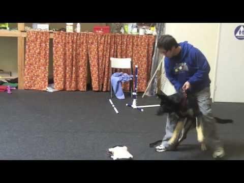 Michael Ellis Puppy Bitework Dog Training Dog Training