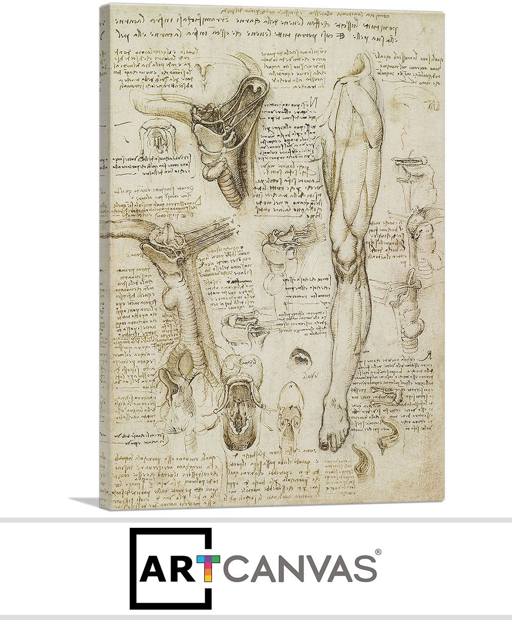 Studies Of The Human Body Leg And Pelvis Canvas Art Print For Sale