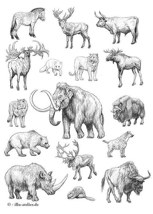 Image result for Eiszeittiere Tiere zeichnen