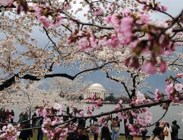 Wednesday Travel Ticker Wine Fest Tickets On Sale Cherry Blossom Festival Cherry Blossom Dc Cherry Blossom