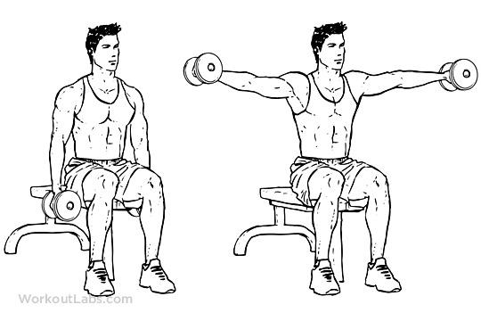 Image result for seated Lateral raise