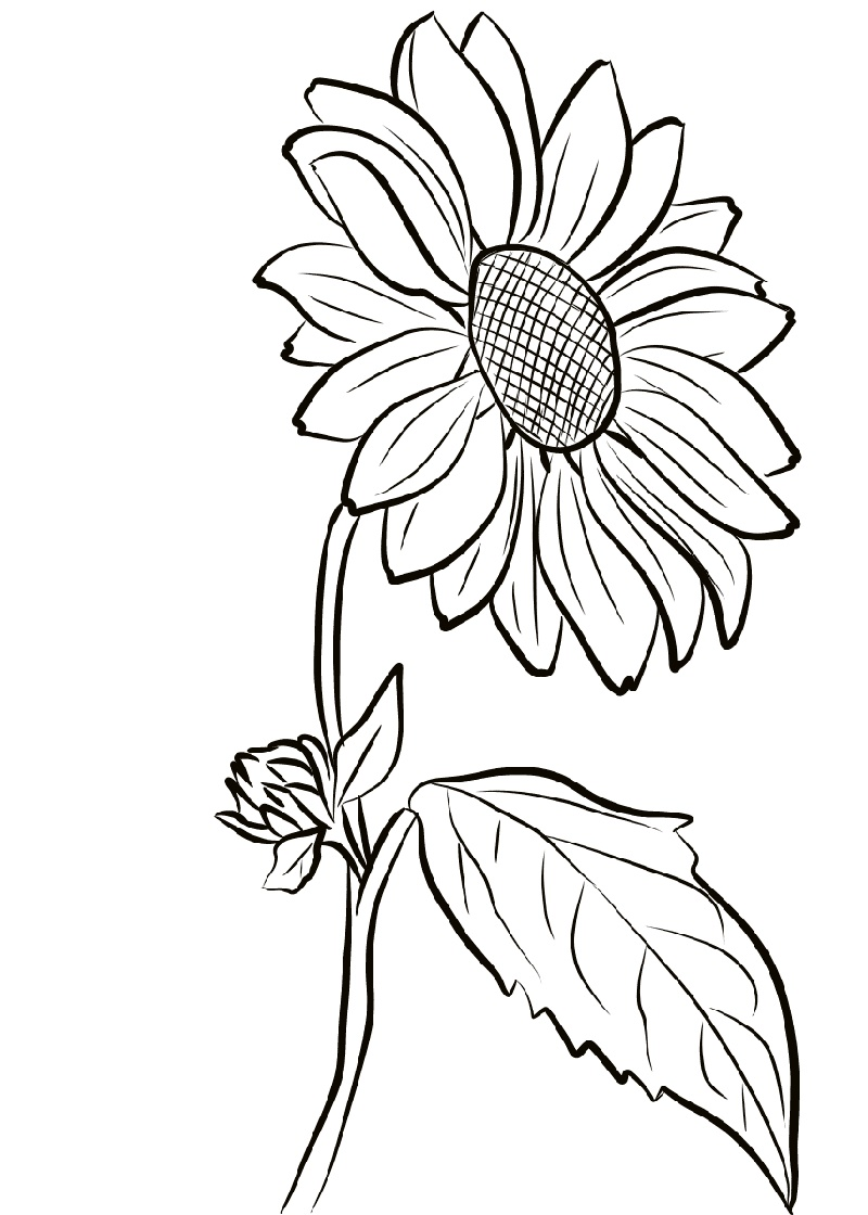 Sunflower Coloring Page Sunflower Coloring Pages Sunflower Drawing Printable Flower Coloring Pages