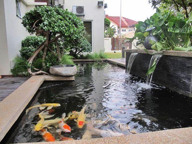 Desain kolam ikan minimalis diluar rumah sebuah rumah for Proyecto cria de peces en estanques