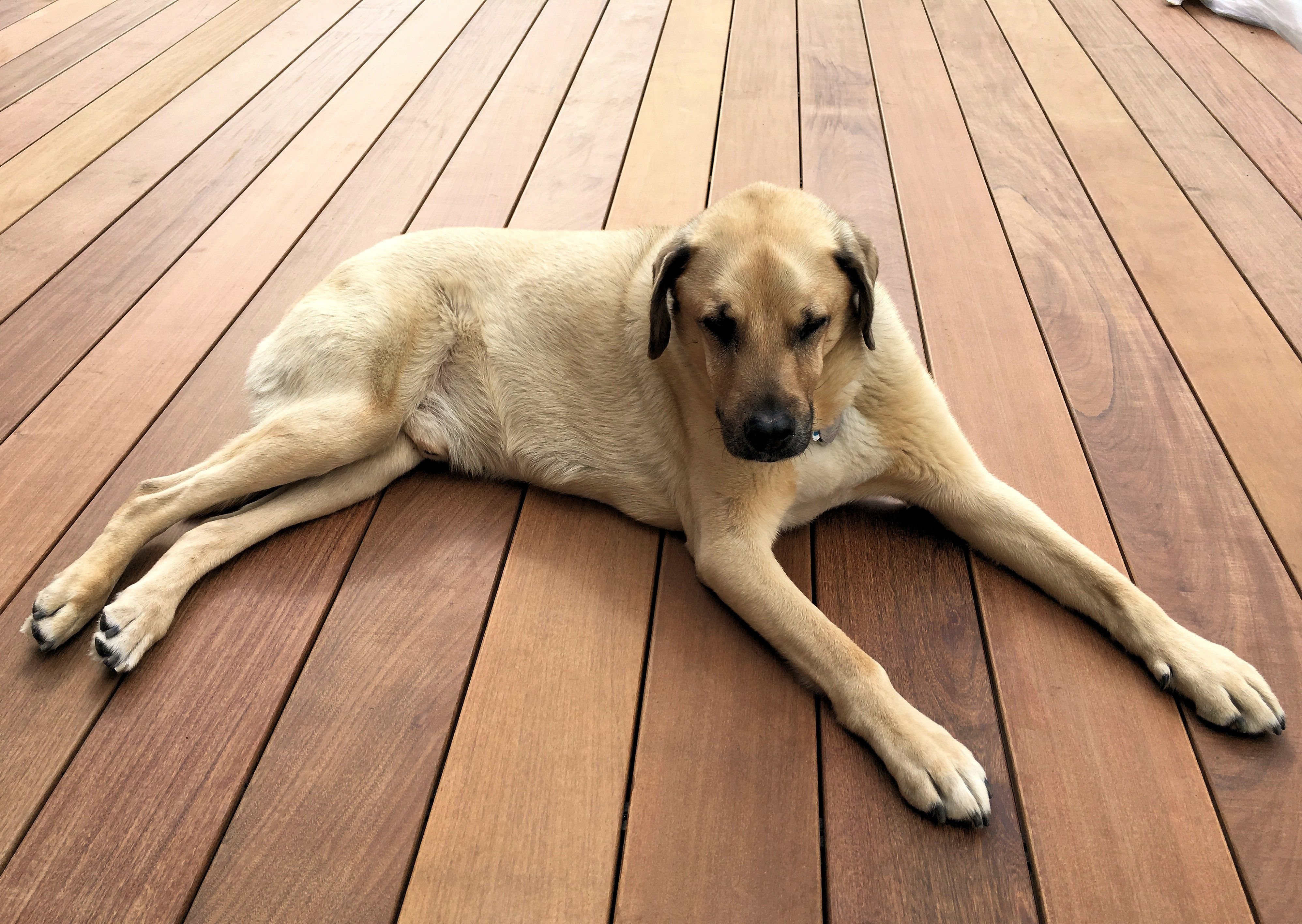 Gus - The Black Mouth Cur #BlackMouthCur #blackmouthcurdog Gus - The Black Mouth Cur #BlackMouthCur #blackmouthcurdog Gus - The Black Mouth Cur #BlackMouthCur #blackmouthcurdog Gus - The Black Mouth Cur #BlackMouthCur #blackmouthcurdog