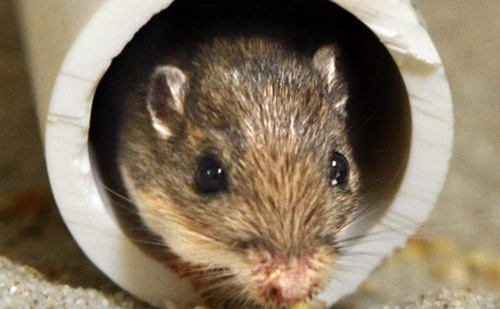 how to get rid of mice in a motorhome