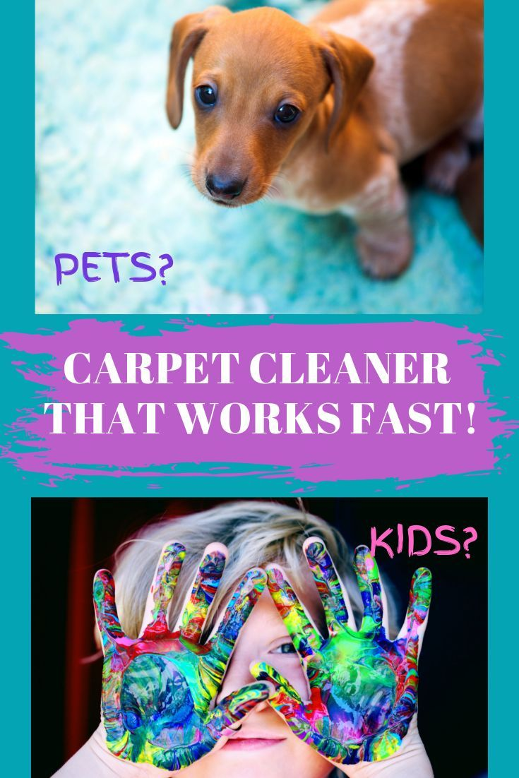 Hoover SmartWash Review Pet carpet cleaners, Pets, Dachshund