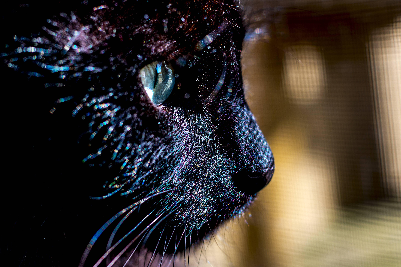 My Roommates Elusive Black Cat Looking Through The Screen Door