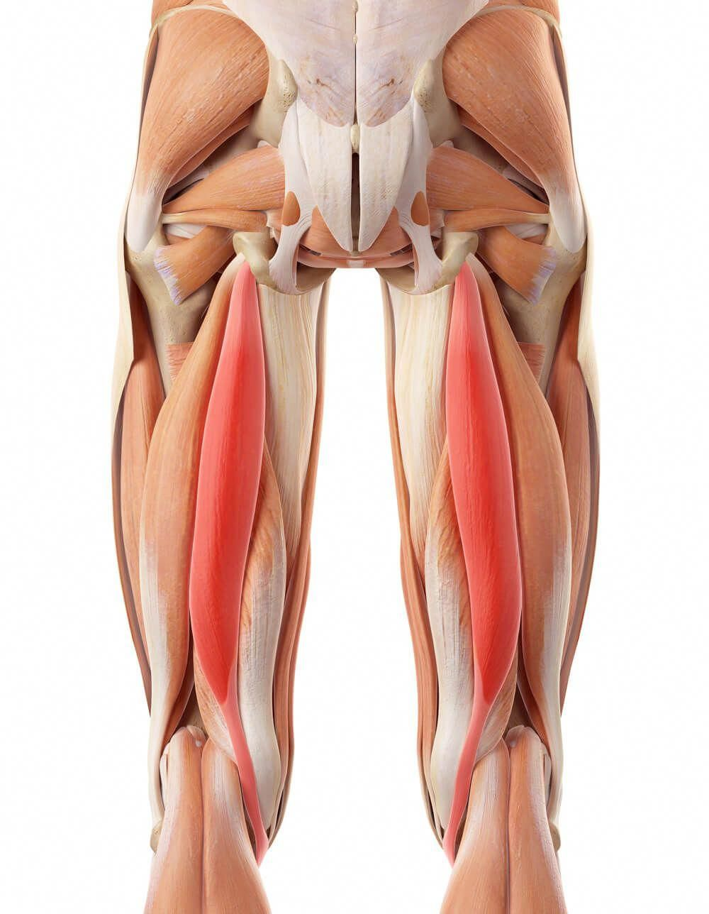 21+ Where are the hamstrings located on the body inspirations
