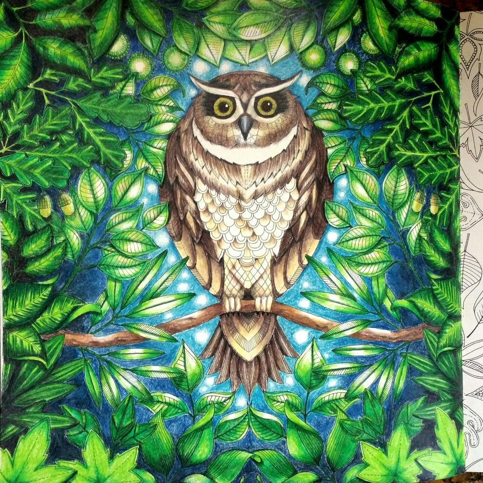 Owl The Secret Garden Inspired By Chris Cheng Prismacolor Penci Johanna Basford Secret Garden Secret Garden Coloring Book Finished Enchanted Forest Coloring