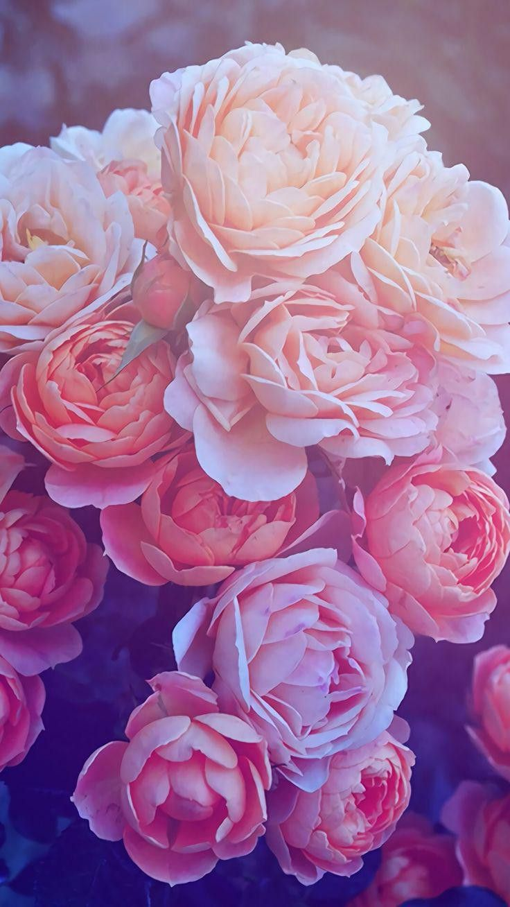 Pin By Madeline Cook On Wallpapers Rose Gold Wallpaper Flower