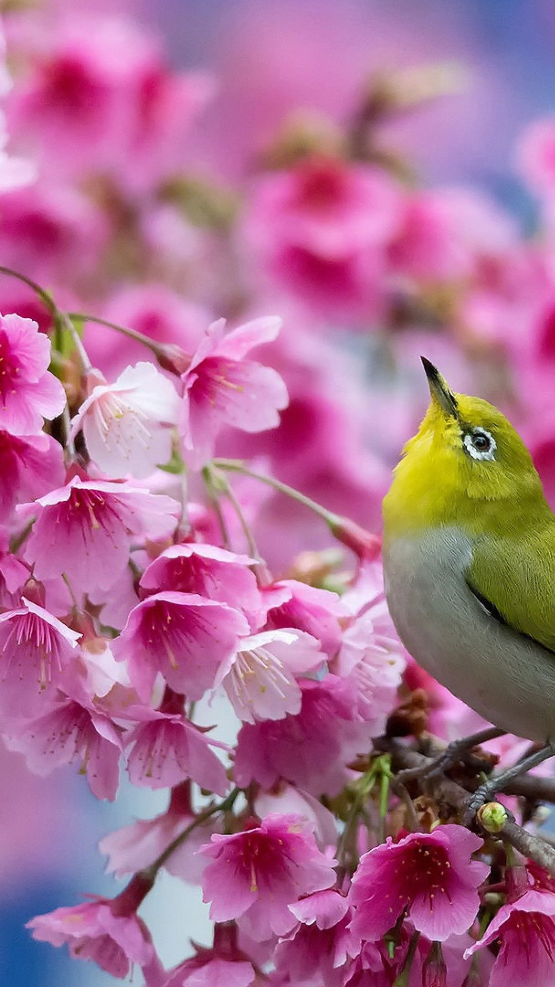 Spring Flowers Android Wallpaper Best Android Wallpapers Spring