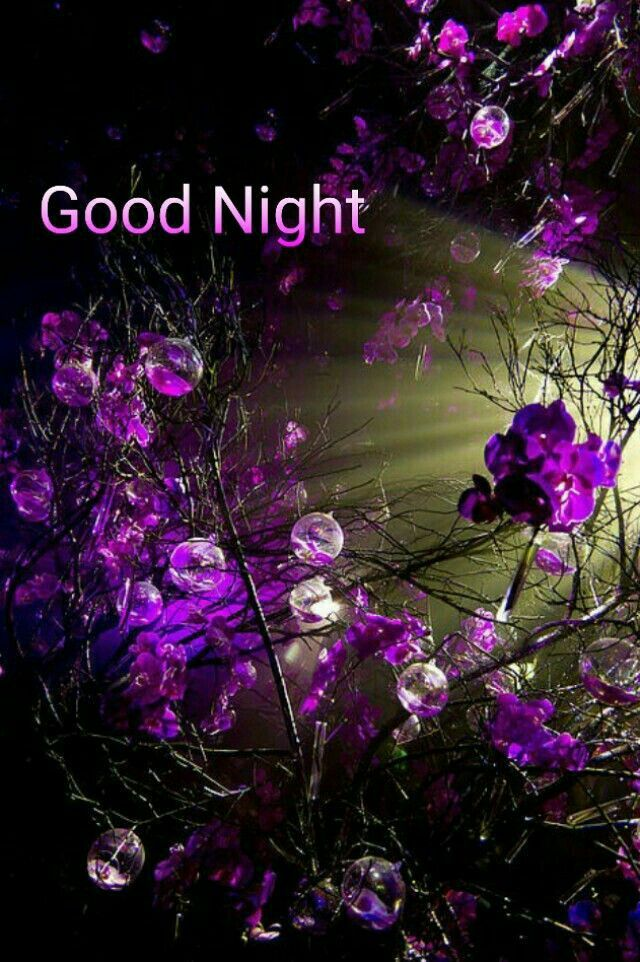 Pin by Shirley on Good Night Purple flowers, Beautiful