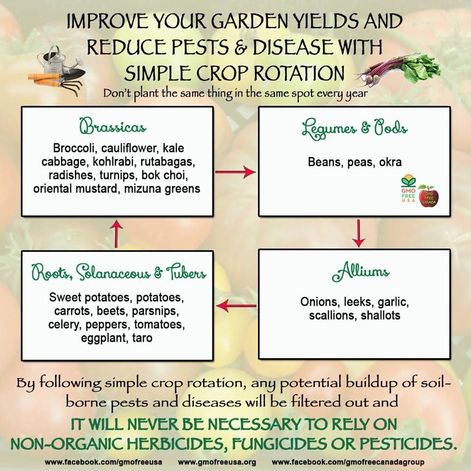 Creating Our First Vegetable Garden Advice Please: Spring Garden Planning: Rotate Your Veggies To Reduce