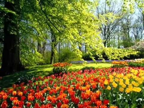 Runu Jhunu Runu Jhunu Re Bhramra Marathi Song Beautiful Flowers Garden Spring Flowers Wallpaper Most Beautiful Gardens